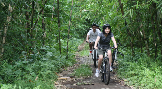 bamboo forest cycling tour